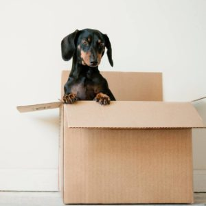 washington-county-oregon-move-out-cleaning-sq